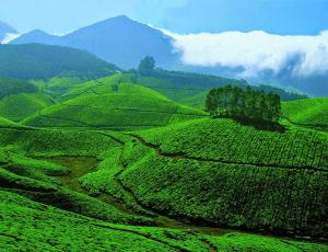 indian-green-1024x784